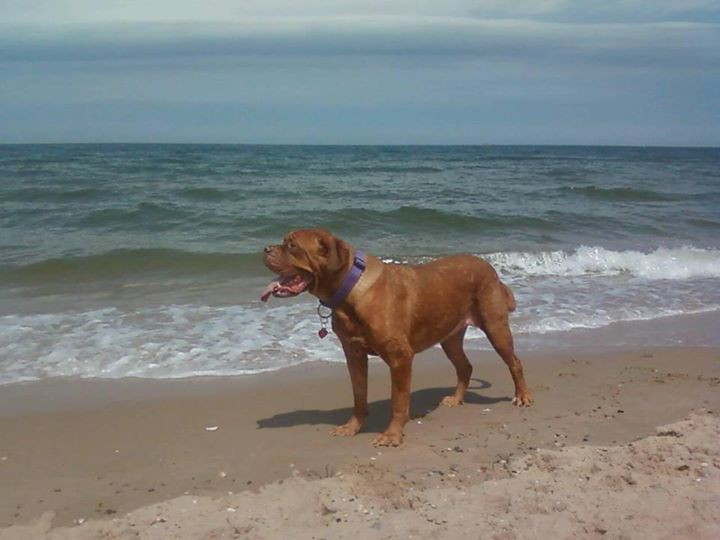 Lola Chenin Connole's Mastiff
